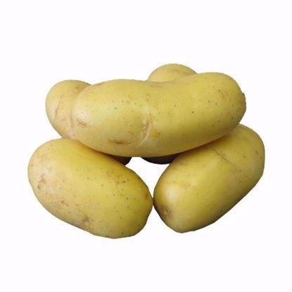 Obrázek Sadbové brambory SUNSHINE  - rané, 25 kg