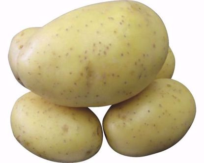 Obrázek Sadbové brambory PRINCESS, 25 kg